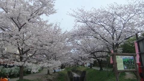 katano.sakura